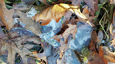 Photograph - Ice And Fallen Leaves by Lynn Hansen