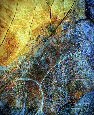 Photograph - Ice And Leaf Landscape by Todd Breitling