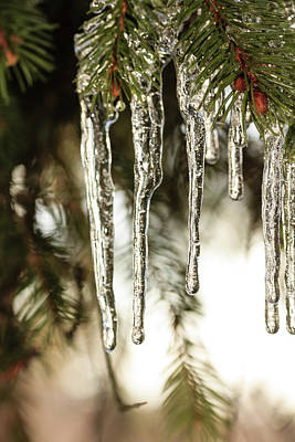 Photograph - Ice At The Arboretum by Joni Eskridge