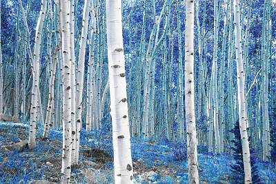 Photograph - Ice Blue Aspens by Lanita Williams