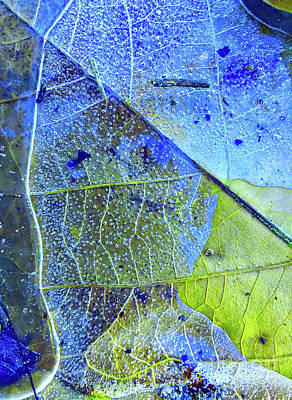 Photograph - Ice Bubbles And Leaf Lines by Todd Breitling