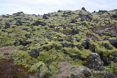 Photograph - Ice Capped Landscape With Volcanic Rocks And Moss by DejaVu Designs