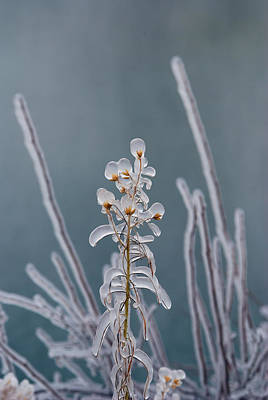 Ice-coated Plants.  Mist From Shoshone Print by Darlyne A. Murawski