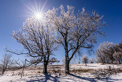 Photograph - Ice Coated Trees by Randy Scherkenbach