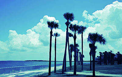 Photograph - Ice Cold Palms Blowing by Aimee L Maher Photography and Art Visit ALMGallerydotcom