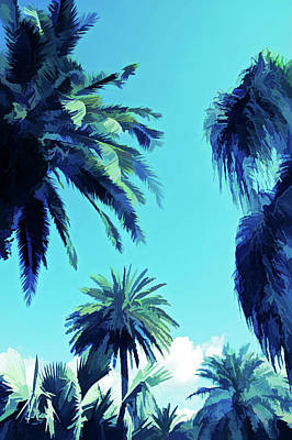 Photograph - Ice Cold Palms In The Sky by Aimee L Maher Photography and Art Visit ALMGallerydotcom