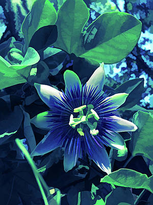 Photograph - Ice Cold Passion Flower 1 by Aimee L Maher Photography and Art Visit ALMGallerydotcom