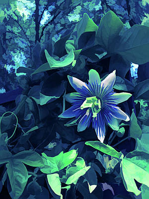Blue Flower Photograph - Ice Cold Passion Flower 3 by Aimee L Maher Photography and Art Visit ALMGallerydotcom