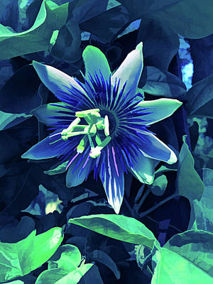 Photograph - Ice Cold Passion Flower 4 by Aimee L Maher Photography and Art Visit ALMGallerydotcom