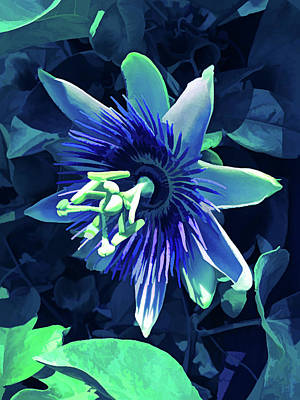 Photograph - Ice Cold Passion Flower 5 by Aimee L Maher Photography and Art Visit ALMGallerydotcom