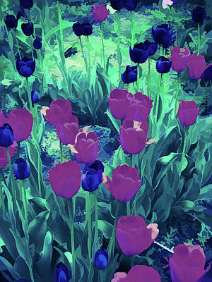 Photograph - Ice Cold Red And Purple Tulips by Aimee L Maher Photography and Art Visit ALMGallerydotcom