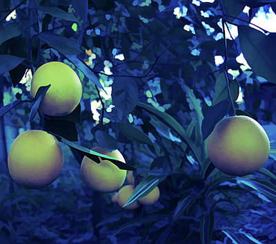 Photograph - Ice Cold Ripe Oranges by Aimee L Maher ALM GALLERY
