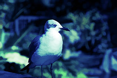 Photograph - Ice Cold Seagull by Aimee L Maher Photography and Art Visit ALMGallerydotcom