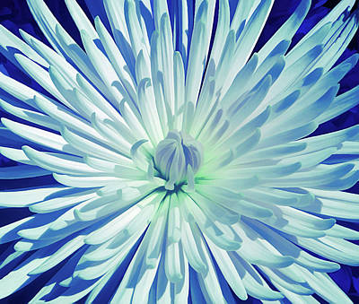Photograph - Ice Cold Starburst by Aimee L Maher Photography and Art Visit ALMGallerydotcom