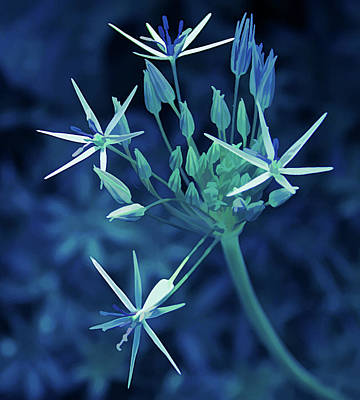Photograph - Ice Cold Starlight Flower by Aimee L Maher Photography and Art Visit ALMGallerydotcom