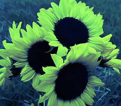 Photograph - Ice Cold Sunflower Bouquet by Aimee L Maher Photography and Art Visit ALMGallerydotcom