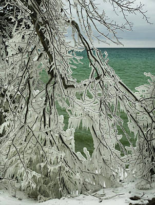 Photograph - Ice-covered Branches by David T Wilkinson