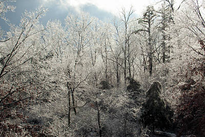 Photograph - Ice Covered Trees by Scott Sanders