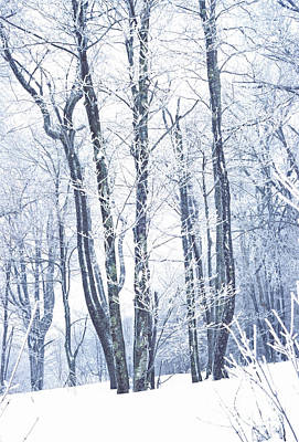 Music Royalty-Free and Rights-Managed Images - Ice-Covered Trees by Thomas R Fletcher