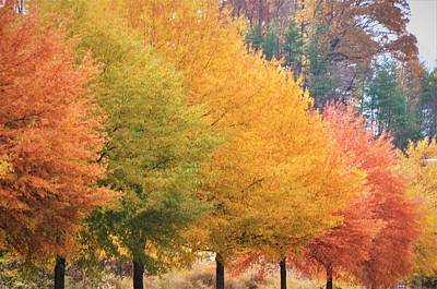 Photograph - October Trees by CK Brown