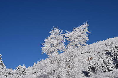 Ice Crystals Ute Pass Cos Co Art Print