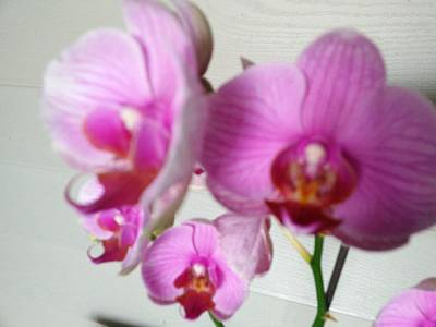 Little Mosters - Ice Cube Orchid by Patricia Ducher