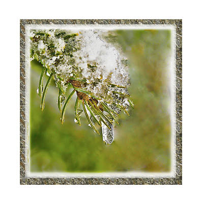 Photograph - Ice Drop by Shari Jardina