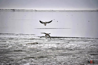 Photograph - Ice Fishing Gulls by Michael Frank Jr