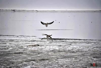 Polaroid Camera - Ice Fishing Gulls by Michael Frank Jr