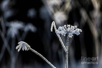 Ice Flower II Art Print by Veikko Suikkanen
