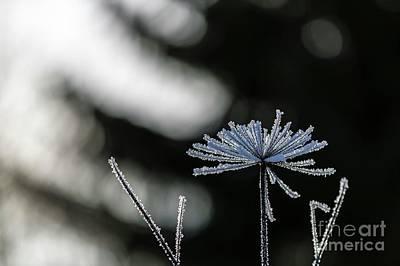 Forest Light Photograph - Ice Flower by Veikko Suikkanen