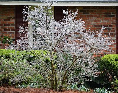 Photograph - Ice In Florida by rd Erickson