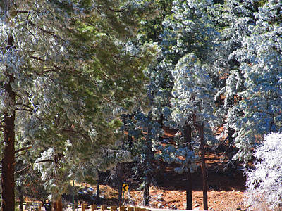 Mans Best Friend - Ice in the Pines #2 by John Diebolt
