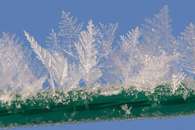 Abstract Forms Photograph - Ice On A Line by Carol Lynch
