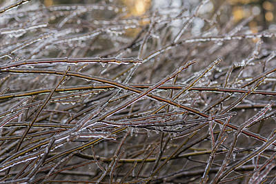 Photograph - Ice On Willow Branches by Robert Potts