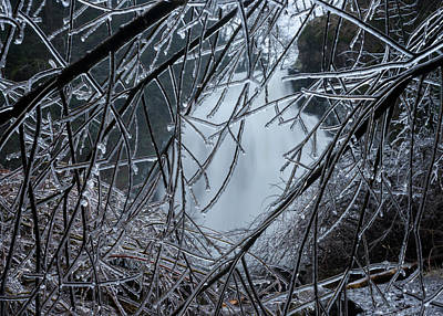 Photograph - Ice On Willows by Robert Potts