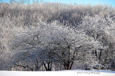 Photograph - Ice Orchard by Diane E Berry