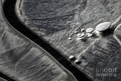 Photograph - Ice Patterns I by Brad Allen Fine Art