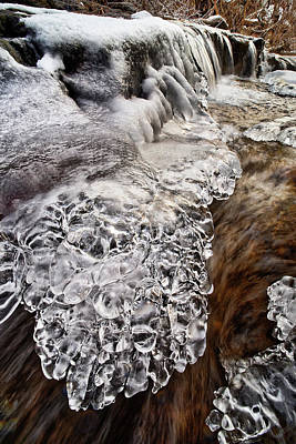 Photograph - Ice Paws by Robert Charity