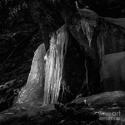 Art Print featuring the photograph Icicle Of The Forest by Tatsuya Atarashi