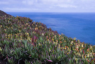 Photograph - Ice Plant Overlook by Suzanne Luft