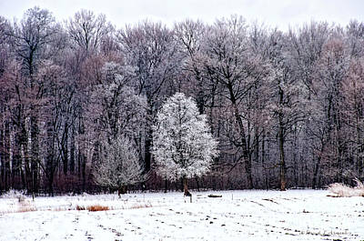 Photograph - Ice Storm by David Arment