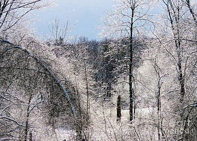 Photograph - Ice Storm by Janice Drew