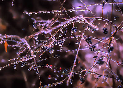 Photograph - Ice Storm by Richard Goldman