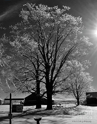 Photograph - Ice Tree by Diane E Berry