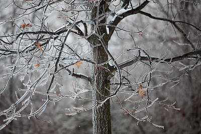 Photograph - Ice Tree by Jane Melgaard