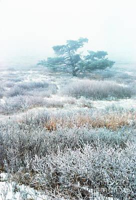 Ice Tree Shenandoah National Park Art Print by Thomas R Fletcher