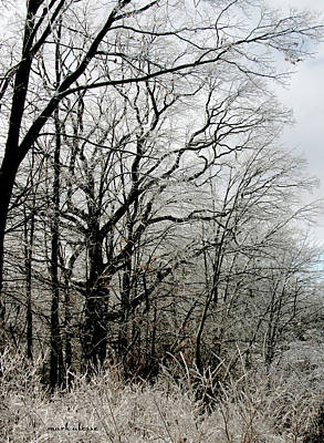 Photograph - Ice Trees by Mark Alesse