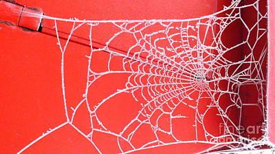Photograph - Ice Web by John Bailey Photos