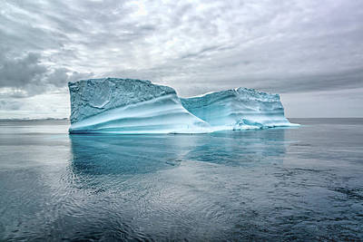 Photograph - Iceberg by Maria Coulson